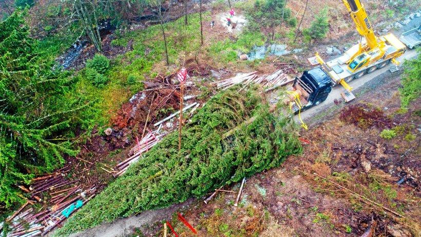 xxl weihnachtsbaum f r den berliner reichstag kommt aus dem harz niedersachsen. Black Bedroom Furniture Sets. Home Design Ideas
