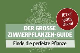 Die besten Tipps zu Pflanzen für Ihr Zuhause