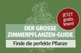 Die besten Harzkurier-Tipps zu Pflanzen für Ihr Zuhause