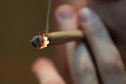 Umfrage: 30 Prozent für generelle Cannabis-Legalisierung